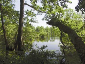 Trap Pond State Park - Laurel DE