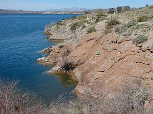 Cattail Cove State Park - Lake Havasu City AZ