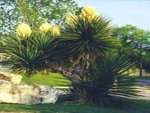 Tejas Valley RV Park & Campground - San Antonio TX