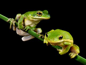 Frog Hollow Campground - Grenada MS
