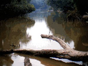 Askew's Landing Campground - Edwards MS