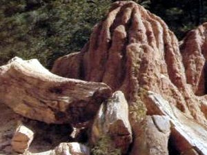 Mississippi Petrified Forest - Flora MS