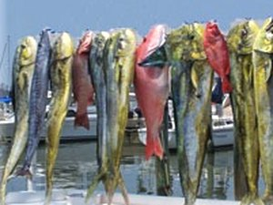 Majestic Oaks RV Resort - Biloxi MS