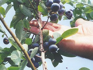 Dabbs Woodland Farm - Saucier MS