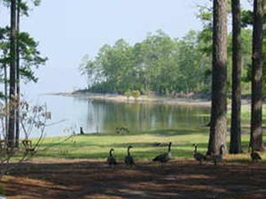 Toledo Bend Resort - Anacoco LA
