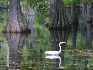 Sam Houston Jones State Park - Lake Charles LA
