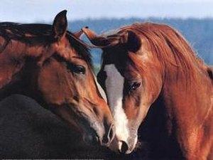 Equine Country USA