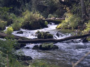 Jason Place Campground - Salem MO