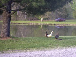 Holiday Lake RV Park - Viburnum MO
