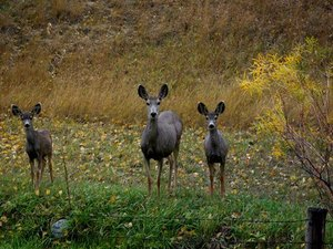 Indian Campground - Buffalo WY