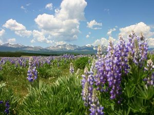 Bear Lodge Resort - Dayton WY