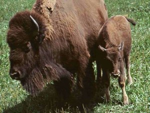 Terry Bison Ranch - Cheyenne WY