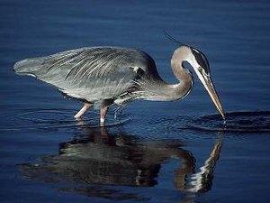 Lake Heron Retreat